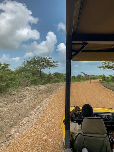 Im Geländewagen auf der Safari in Tansania im Selous Game Reservat.