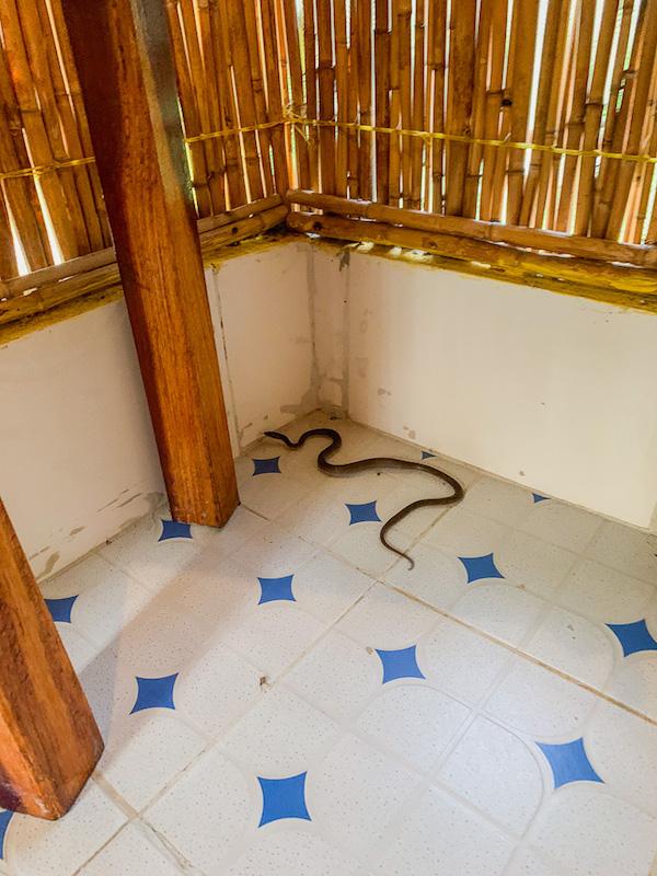 Eine Schlange im Zimmer auf der Safari in Tansania im Selous Game Reservat.