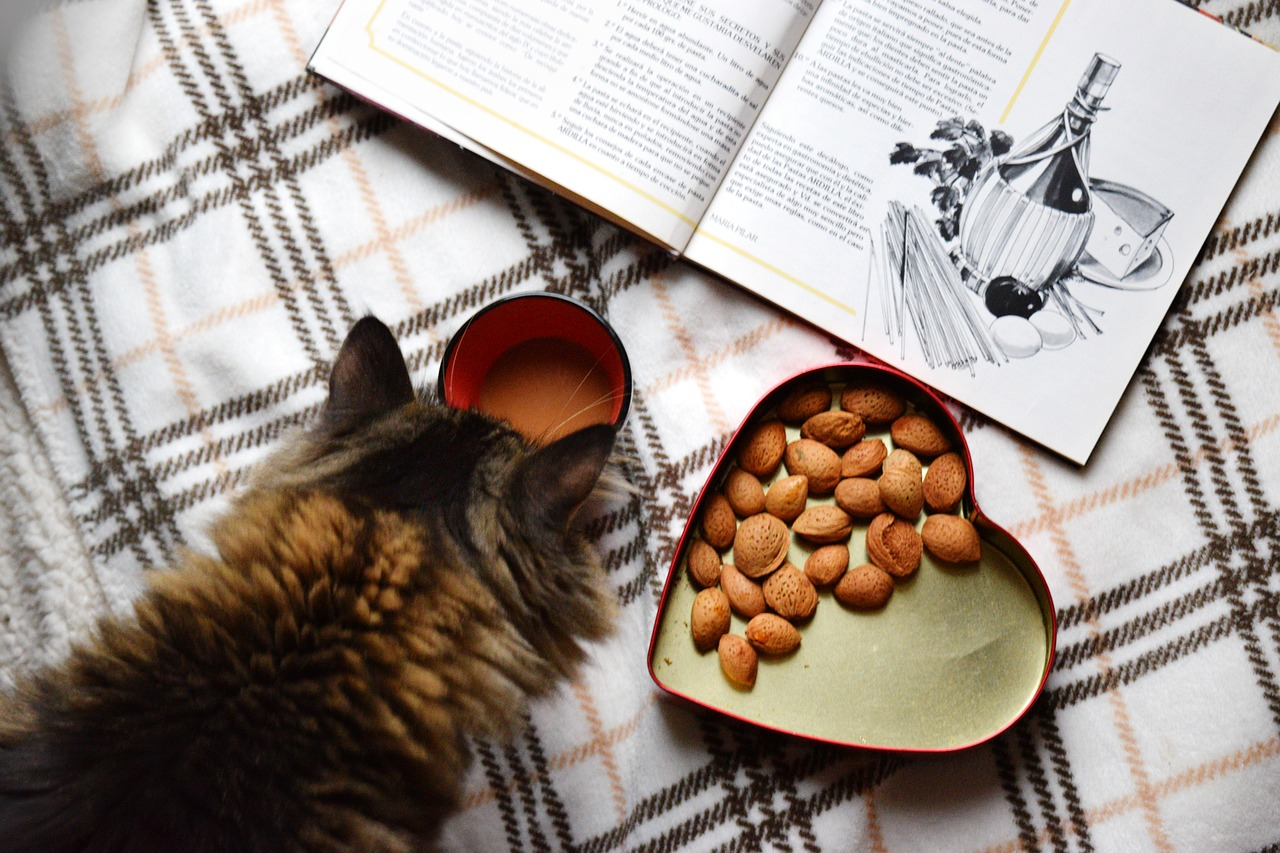 Kulinarische Büchertipps und Lesetipps. Tolle und inspirierende Bücher auf Empfehlung der Bleiche Bibliothekarin Frau Holler.