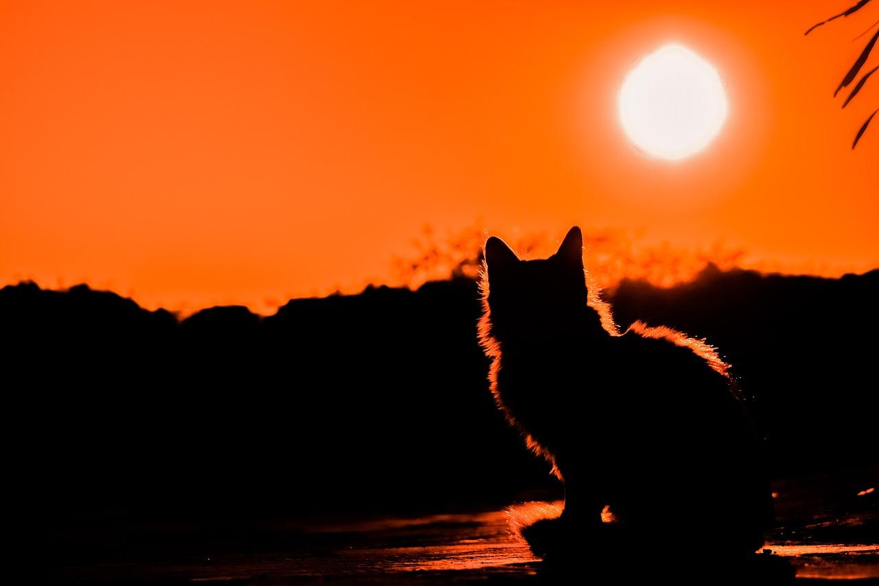 Ein Bild von einer Katze im Sonnenuntergang zum Weltkatzentag.